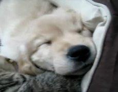 Sleeping Puppy Gets Bath From Kitty