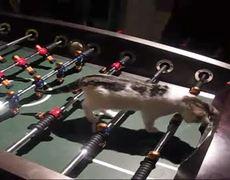 Kitten Plays Foosball