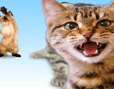 Kittens Singing Joy Joy Joy Kids Video
