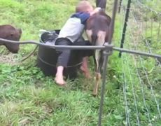 Compilation Goats Are Awesome