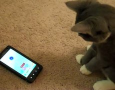 Cute Kitten Plays Android Game App on Droid X