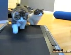 Two Kittehs on a Treadmill