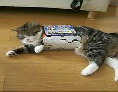 El gato más famoso de Japón