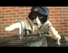 DJ Kitteh