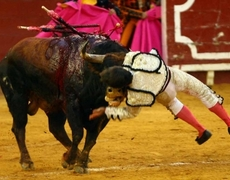 El torero Sergio Aguilar sufre una cornada en el cuello en la plaza de Bilbao