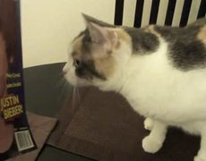Cat HATES Justin Bieber (official video)