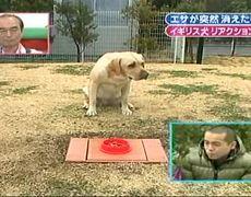Perros muy Divertidos