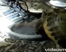 Acto Sexo Sexy Tortuga Zapato Animales Calientes Cachondos