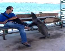 Funny Sea Lion Wants A Seat