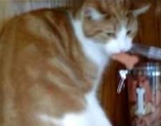 Animalitos ladrones captados en video