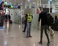 Perro detecta 4 kilos de cocaína en Aeropuerto de Barcelona