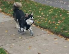 Dog runs for the first time prostheses created with 3D printer