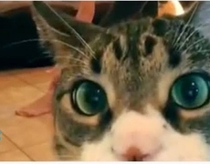 Gatos divertidos y locos Recopilación