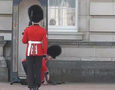 VIDEO: Buckingham Palace guard slips and falls