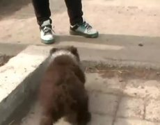 A bear cub is being cared for by family in Russia