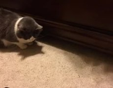 Cat Steals Food From Another Cat