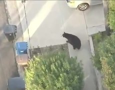 Man Runs Into Bear While Texting