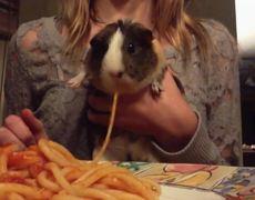 OMG - Guinea Pig Slurps Up Spaghetti