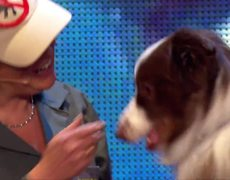 Britain's Got Talent 2015: Catch Jules and Matisse the dog in action
