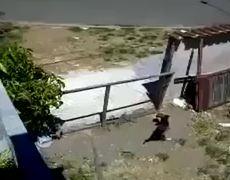Perro salta la cerca para aparearse y escapa
