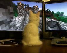 Cute Kitten Plays Minecraft