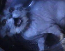 Animal Cruelty: Couple putting cat in the washing machine
