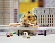 Hamster eats a city