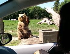VIRAL: The great catch of Bear