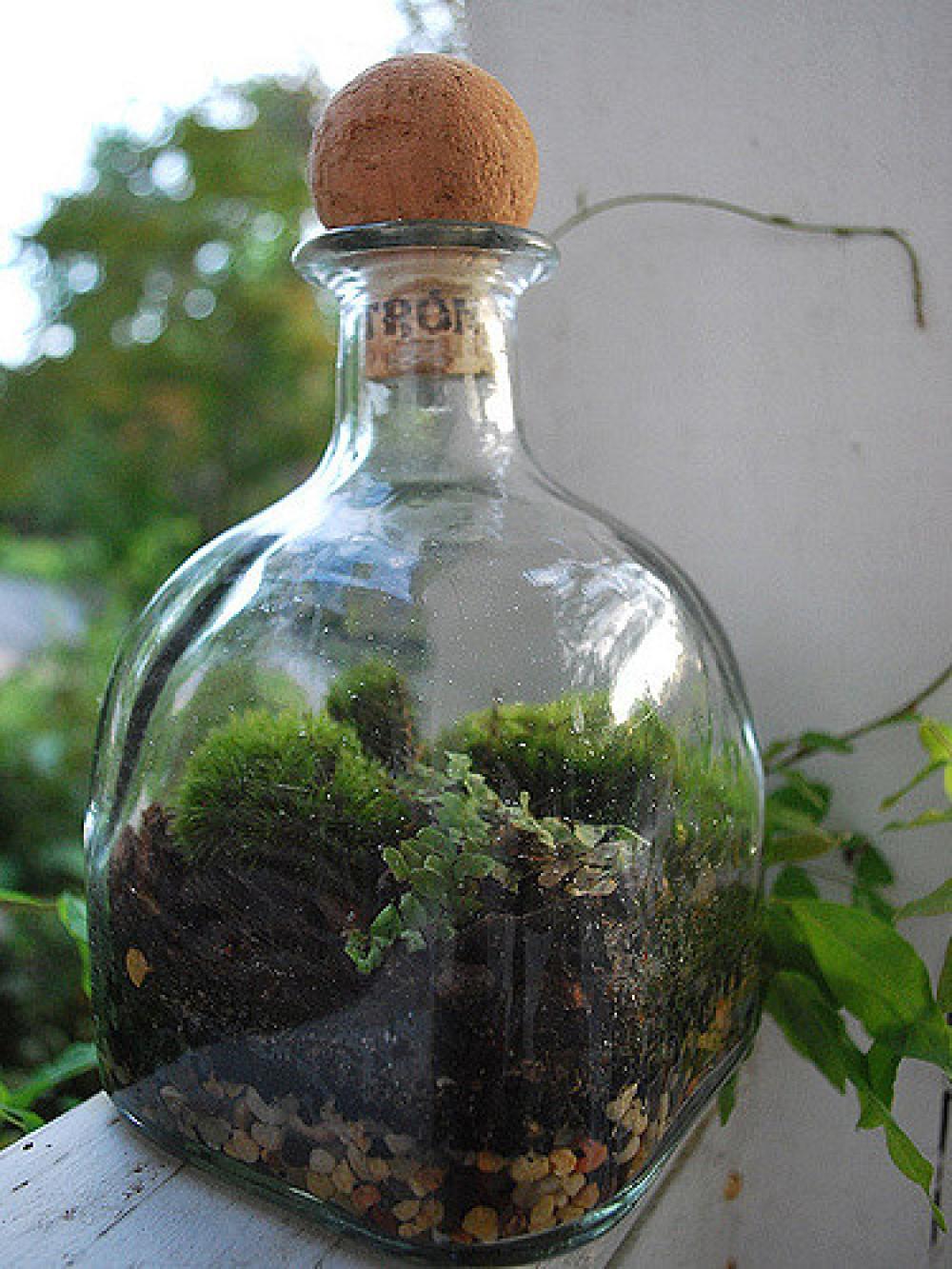 Resultado de imagen para ecosistema en miniatura