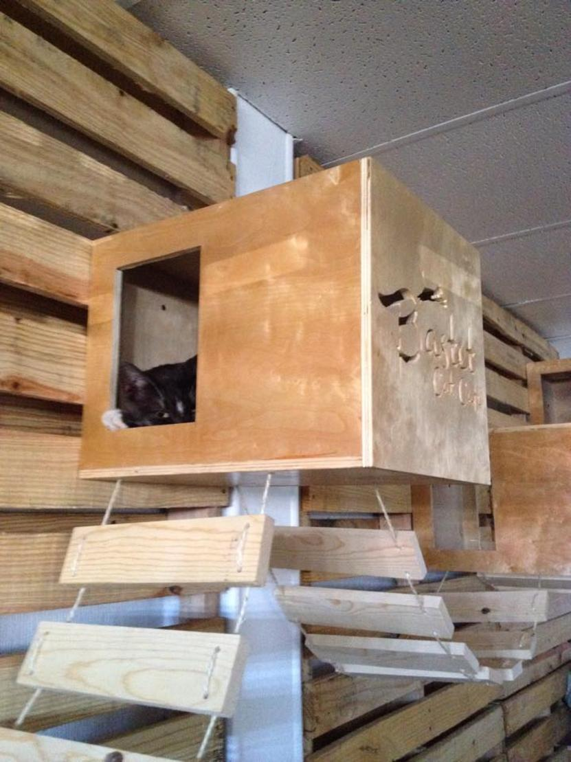 Fotografía de Bastet Cat Café