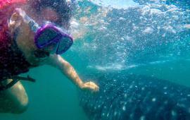 Visitamos al increíble tiburón ballena en Ensenada