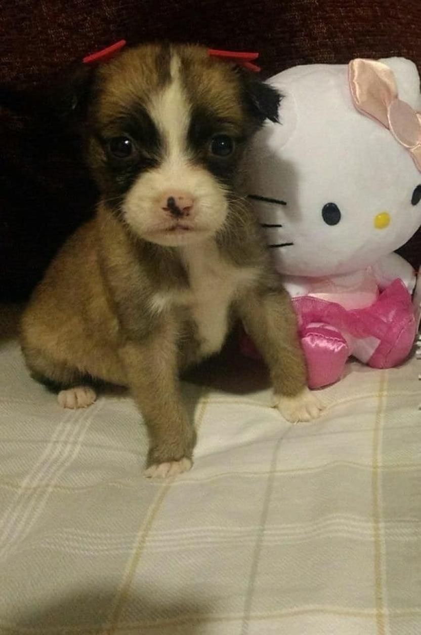 La pequeña perrita se encuentra resguardada para después darse en adopción
