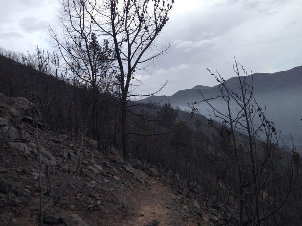 Así quedó el Bosque, reducido a cenizas. Foto: Facebook Ejido Adolfo Ruiz Cortinez