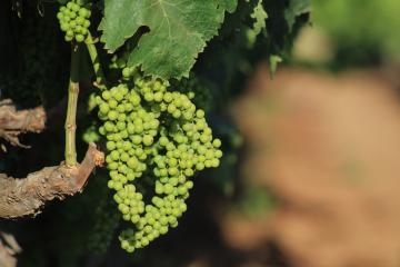 Best of Baja 2017: Vote Best Winery/ Wine