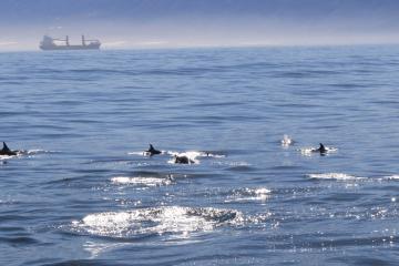 Continúan este 2018 avistamientos de ballenas en Ensenada