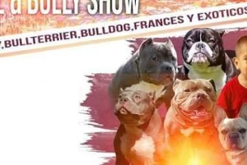 Do Not Miss the 9th Rosarito Pitbull and Bully Show!