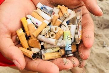Rescatistas juntan en playa de Ensenada 60 colillas de cigarros en...