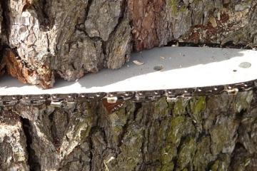 Tala de árboles es en territorio estadounidense