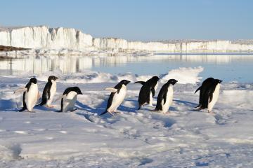 Una colonia de pingüinos se mantuvo oculta por milenios