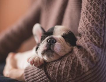 Las mujeres duermen mejor al lado de sus perros que con su pareja