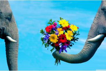 5 reasons why flowers are the best Valentine's Gift