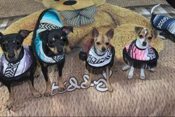 Artesanos Tlaxcaltecas, crean ponchos para perritos