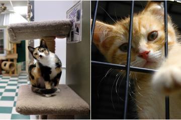 Ingeniero crea el primer refugio para gatos en Beijing