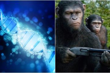 Crean monos transgénicos con gen de inteligencia humana