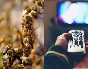 Ve porno y salvarás a las abejas de la extinción