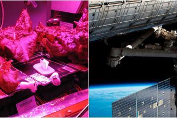 Mexicano presenta proyecto a la NASA de cultivos espaciales