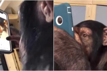 VIDEO: ¡Mira este mono usar Instagram!