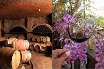 Casta de Vinos, la productora regional con más reconocimientos en...