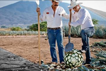Es una realidad: El tequila ha conquistado al mundo