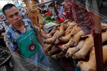 Corea del Norte combate el calor comiendo carne de perro